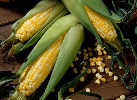 一個個金黃色顆粒飽滿的玉米,一個個就像一個胖娃娃