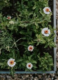 一组超有意境感的草木花卉摄影图片欣赏
