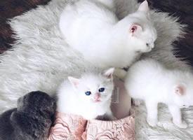 一组超级可爱的刚刚出生的小猫崽图片欣赏