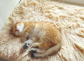 一组超可爱的小猫猫的睡觉图片欣赏