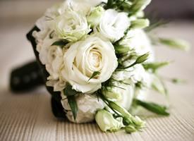 一组纯洁高贵的白玫瑰图片欣赏
