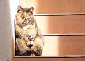 小猫咪各种搞怪可爱的坐姿图片欣赏