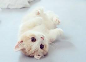 一组超可爱的大眼睛白色小猫猫图片