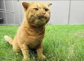 两只猫吃草的表情,差别真大,第一只笑