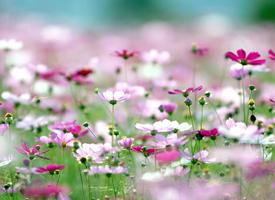 姹紫嫣紅的花卉盛開著,展現那勃勃生機