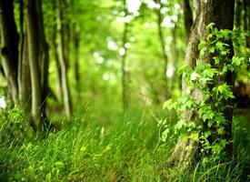 绿色护眼森林风景图片桌面壁纸欣赏