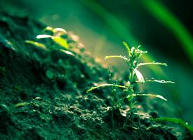 绿色护眼小草微距摄影图片桌面壁纸