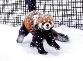 一组雪中玩耍奶霜焦糖小熊图片欣赏