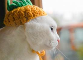 好好的菠萝帽怎么被这只猫猫戴出了紧箍咒的感觉