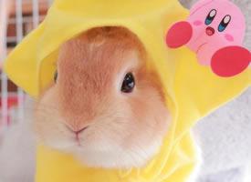 十一區的fualii,一個酷愛帽子的小兔嘰