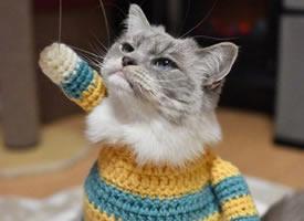 一组超级可爱的百变小猫咪图片欣赏