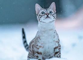 再酷的猫雪地里也怕冷!我穿件衣服再来拍