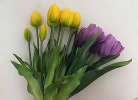 一组个个花苞一举展开各种颜色的郁金香图片