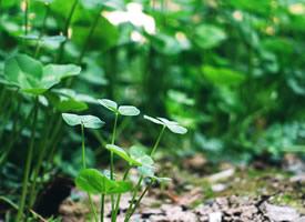 一组绿色护眼的植物绿叶嫩芽图片欣赏