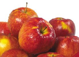 成熟的苹果总有一种新鲜,香甜的滋味