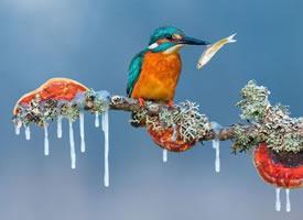 唯美冬日雪景小清新桌面壁纸图片