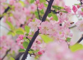 三月初春,自然是草長鶯飛、花紅柳綠的人間好時節