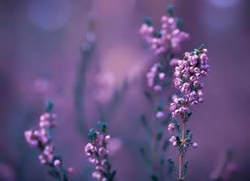 一组意境感很美的紫色的花图片欣赏