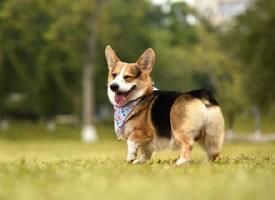 很有耐心抓拍的各个狗狗可爱瞬间图片
