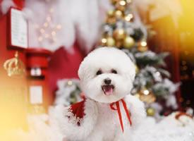 一组温顺可爱的狗狗艺术拍摄图片欣赏
