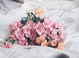 粉色康乃馨,她代表了爱、魅力、关怀和尊敬