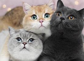 猫猫也想要拥有有猫相伴的日子