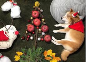 一组超可爱的小狗狗睡觉的可爱图片欣赏
