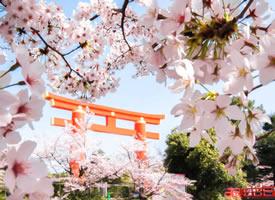 約好春日櫻花和你 春天如約而至  別負花期
