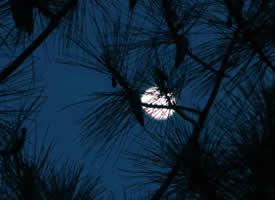 月半弯,云墨染,一抹相思,轻缱绻