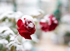 琼枝疏影,幽姿冷妍 朦胧清黛孤洁,相慰一庭香雪