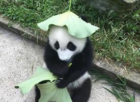 """哈哈这是我见过最可爱的""""原谅帽""""了"""