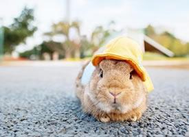 一組超級可愛小兔子戴帽子圖片欣賞