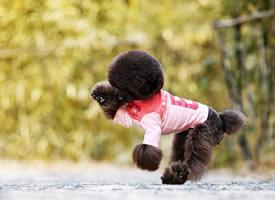 春天里小狗活波可爱的拍摄图片欣赏
