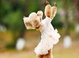 两只可爱狗狗的快乐生活图片欣赏