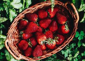 草莓不但好看 吃起来也甜甜的