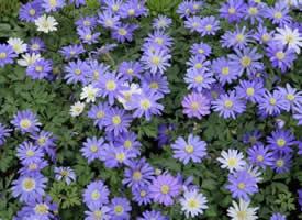 春天来了漫山遍野开满了鲜花