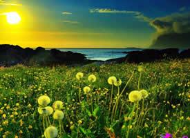 绿色护眼风景图片壁纸欣赏