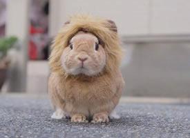 炒雞蓬松柔軟的小兔兔,看著就手感一級棒啊