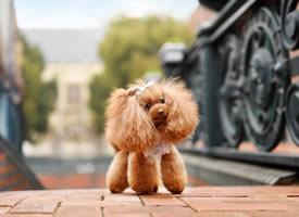 一组超级可爱的棕色小狗狗图片欣赏