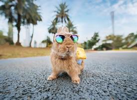 兩只超級可愛的小兔子圖片欣賞
