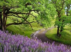 一组唯美林间小道风景图片欣赏