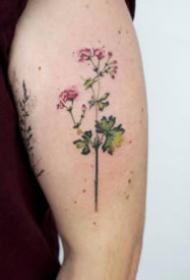 胳膊上小清爽风格的小花草纹身图片
