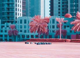 如果城市的綠色都變成粉色