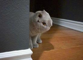 来自小灰猫的歪头杀,萌化