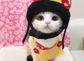 小猫咪戴上不同的帽子后,萌爆了