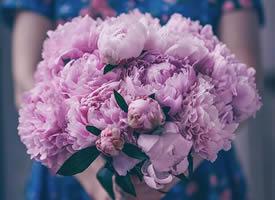 一组森系感紫色系花束图片欣赏