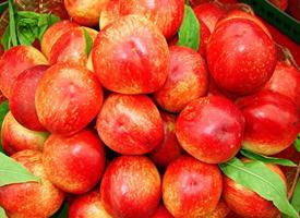 紅紅的桃子看著就十分誘人的模樣