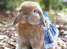 可愛的小兔嘰taffy,羨慕它有那么多可愛的小衣服~