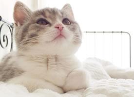 一组雪白雪白的猫猫看起来非常好看