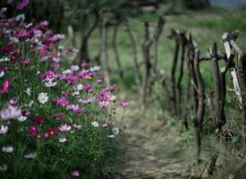花径风来百样香,春深郊野景殊常